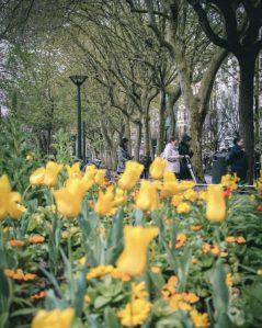 Boulevard-garden-san-sebastian