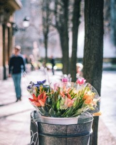 flowers-san-sebastian